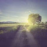 Estrada no campo e no campo com luz solar Fotografia de Stock