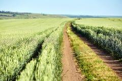 Estrada no campo verde no campo com céu azul Fotos de Stock
