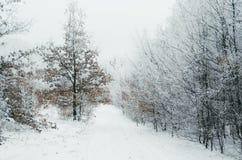Estrada no esclarecimento da floresta do inverno Fotos de Stock Royalty Free
