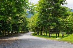 Estrada no estudo de Jedkod Pongkonsao e no centro naturais do ecoturismo, S Foto de Stock