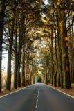 Estrada no La Esperanza da floresta imagens de stock royalty free
