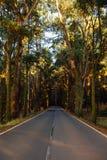 Estrada no La Esperanza da floresta Fotos de Stock