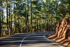 Estrada no La Esperanza da floresta imagem de stock