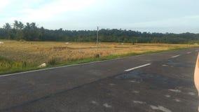 Estrada no lado do campo do arroz foto de stock