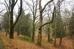 Estrada no parque do outono Imagem de Stock Royalty Free
