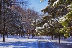 estrada no parque iluminado pelo sol sob a neve fotografia de stock
