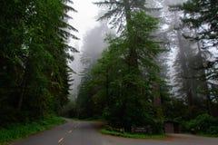 Estrada no parque nacional da sequoia vermelha da floresta, Califórnia EUA imagem de stock royalty free