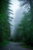 Estrada no parque nacional da sequoia vermelha da floresta, Califórnia EUA fotografia de stock royalty free