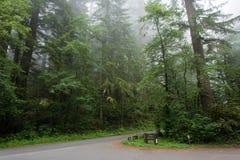 Estrada no parque nacional da sequoia vermelha da floresta, Califórnia EUA foto de stock