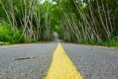 Estrada no túnel da árvore Imagem de Stock Royalty Free