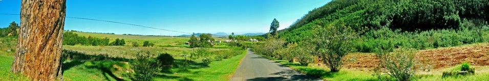Estrada no vinhedo do vinho de Stellenbosch Imagens de Stock Royalty Free