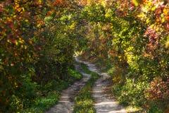 Estrada nos arbustos do outono Imagens de Stock Royalty Free