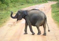 Estrada nova do cruzamento do elefante imagem de stock