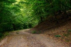 Estrada obscuro em uma floresta densa da montanha imagens de stock royalty free
