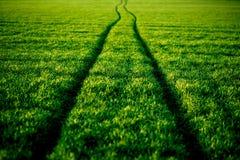 Estrada ondulada no Greenfield, mola, verão Fotos de Stock Royalty Free