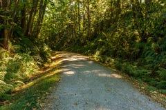 Estrada ou fuga de caminhada cênico e bonita do cascalho na floresta fotos de stock royalty free