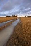 Estrada outonal do campo Foto de Stock