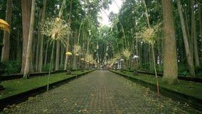 Estrada para o templo na floresta do macaco de Sangeh vídeos de arquivo