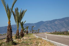 Estrada pavimentada com palma Fotografia de Stock Royalty Free
