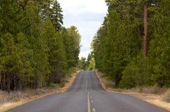 Estrada pavimentada longa na floresta Fotografia de Stock