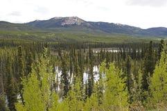 Estrada Peace River de Alaska imagem de stock royalty free