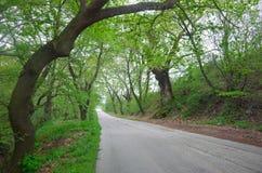 estrada pequena na natureza Fotos de Stock