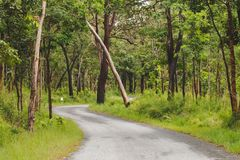 Estrada pequena na selva Imagem de Stock