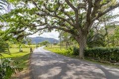 Estrada perto de Pinar del Rio, Cuba Fotos de Stock Royalty Free