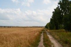 Estrada perto do trigo Imagem de Stock