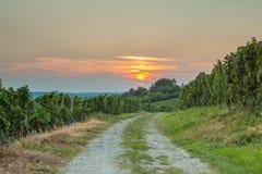 Estrada perto dos vinhedos Foto de Stock