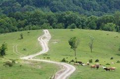 Estrada pisada-para baixo vaca do prado da paisagem ensolarada Foto de Stock Royalty Free