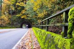 Estrada pitoresca do outono com túnel na floresta amarelada Imagens de Stock