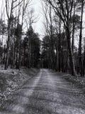 Estrada preto e branco imagens de stock royalty free