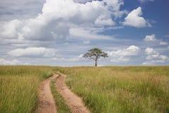 Estrada que atravessa o parque nacional de Maasai Mara (Kenya) Imagem de Stock Royalty Free