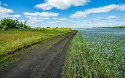 A estrada que atravessa os campos do linho de florescência fotos de stock