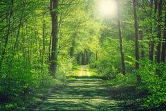 Estrada que atravessa uma floresta verde imagem de stock