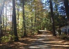A estrada que aumenta através das madeiras em um dia ensolarado em Maine preguiçoso relaxa o telecontrole das férias fotos de stock