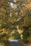 Estrada que conduz através de uma floresta decíduo no outono fotografia de stock royalty free