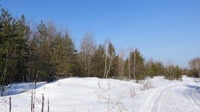 A estrada que corre através da neve descascará a floresta, um dia ensolarado fotografia de stock royalty free