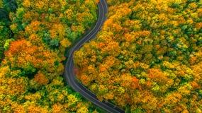 Estrada que enrola sua maneira acima através da floresta grossa Imagem de Stock Royalty Free