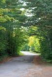 Estrada que viaja sob um arco de árvores verdes Fotografia de Stock