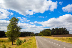 Estrada rodoviária asfaltada Paisagem com árvores Imagem de Stock Royalty Free