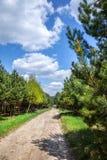 Estrada rural através da floresta Imagem de Stock