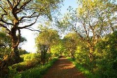 Estrada rural bonita na luz do sol Imagens de Stock