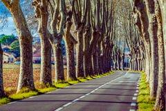 Estrada rural com as árvores altas em ambos os lados Fotografia de Stock Royalty Free