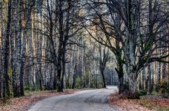 Estrada rural na floresta, Lituânia imagens de stock