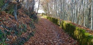 Estrada rural no outono foto de stock