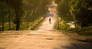 Estrada rural no por do sol imagem de stock royalty free