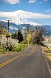 Estrada rural, pomares de maçã, capa do Mt. foto de stock
