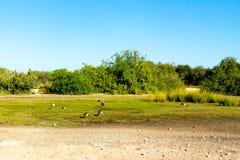 Estrada a Safari Park em Sir Bani Yas Island, Abu Dhabi, Emiratos Árabes Unidos fotografia de stock royalty free